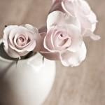 white roses in a white vase