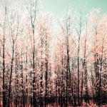 pastel-trees